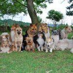 Smečka psů