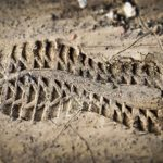 Stopa boty v písku